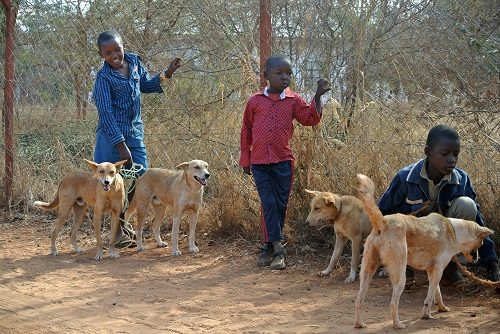 A Dog's Life in Kenya