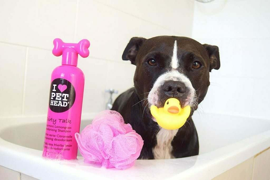 How to Find the Best Dog Shampoo for Your Dog's Skin