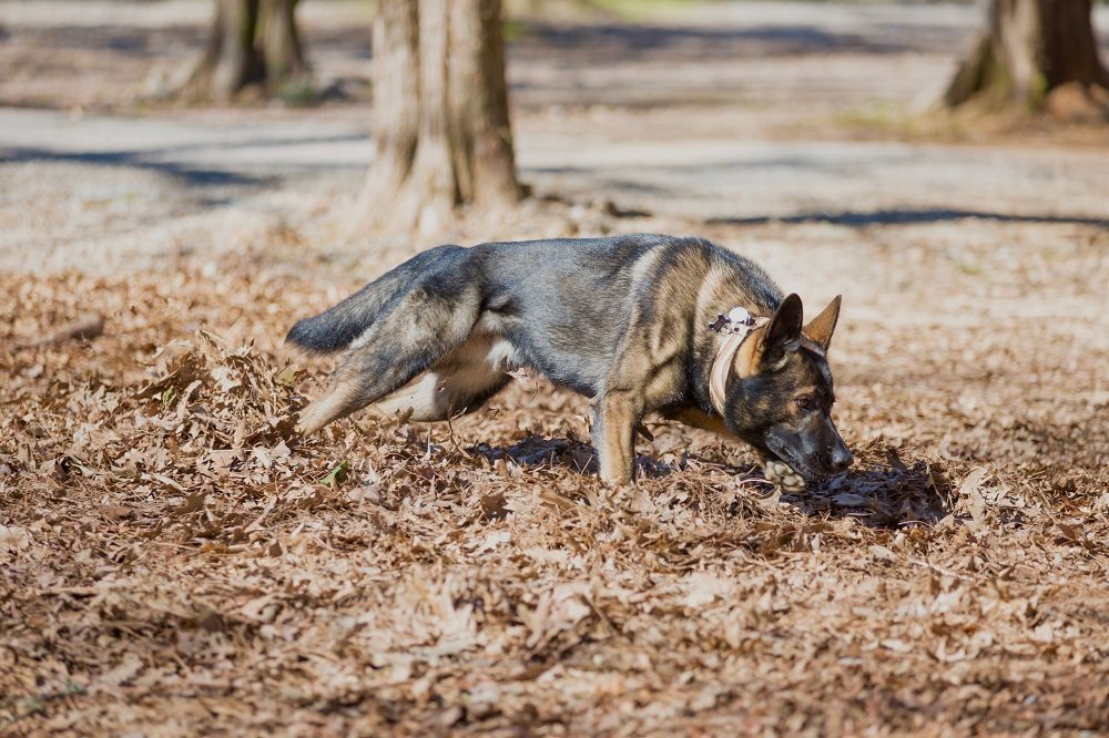 What the Dog Knows: Understanding How Dogs Perceive the World