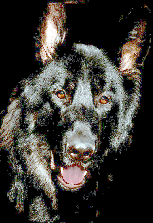 What is Chronic Degenerative Radiculo Myelopathy in Dogs?