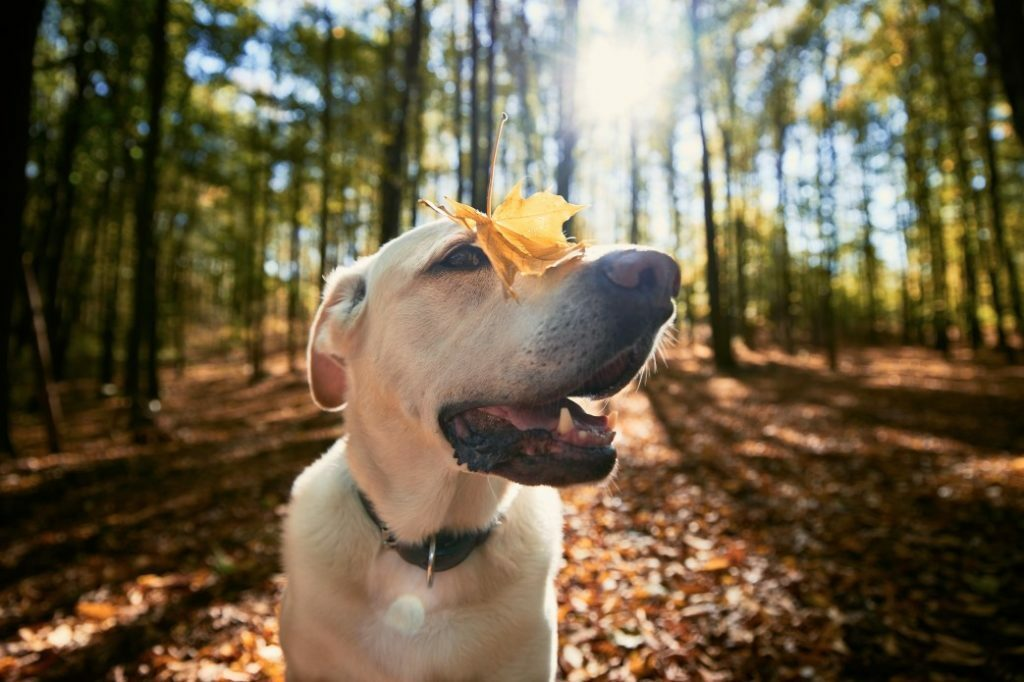 5 Ways to Tell If Raw Is Right for Older Dogs