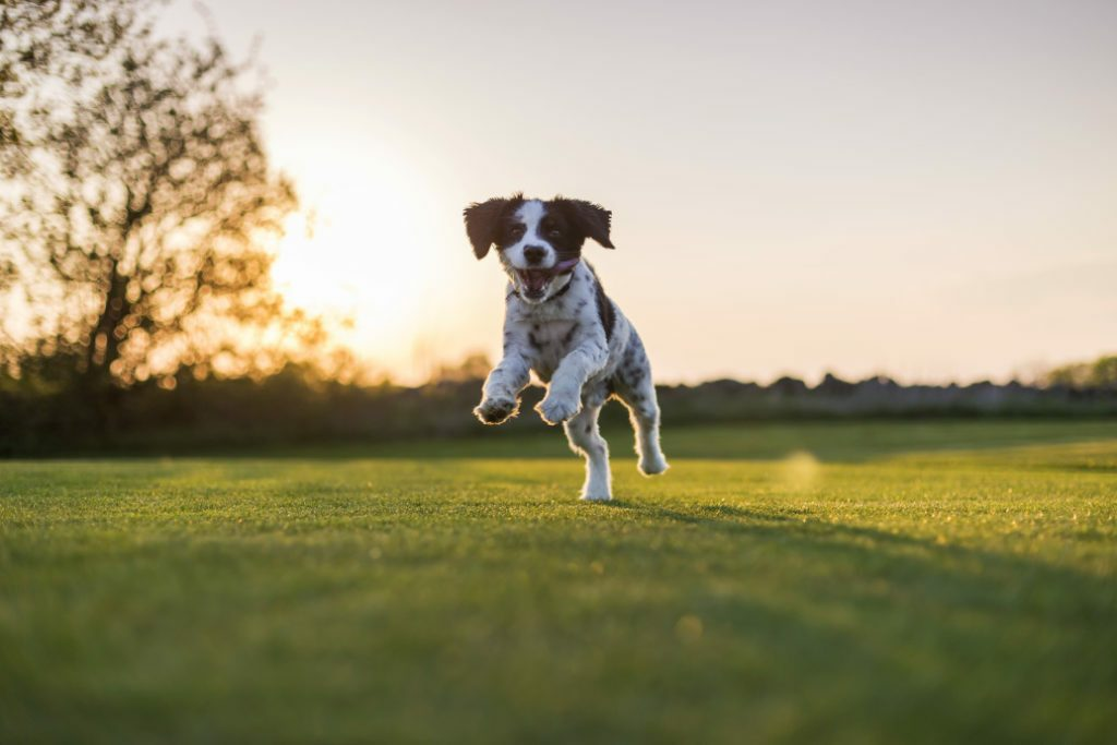 Probiotics For Dogs: What You Should Know Before Giving Probiotics To Your Dog