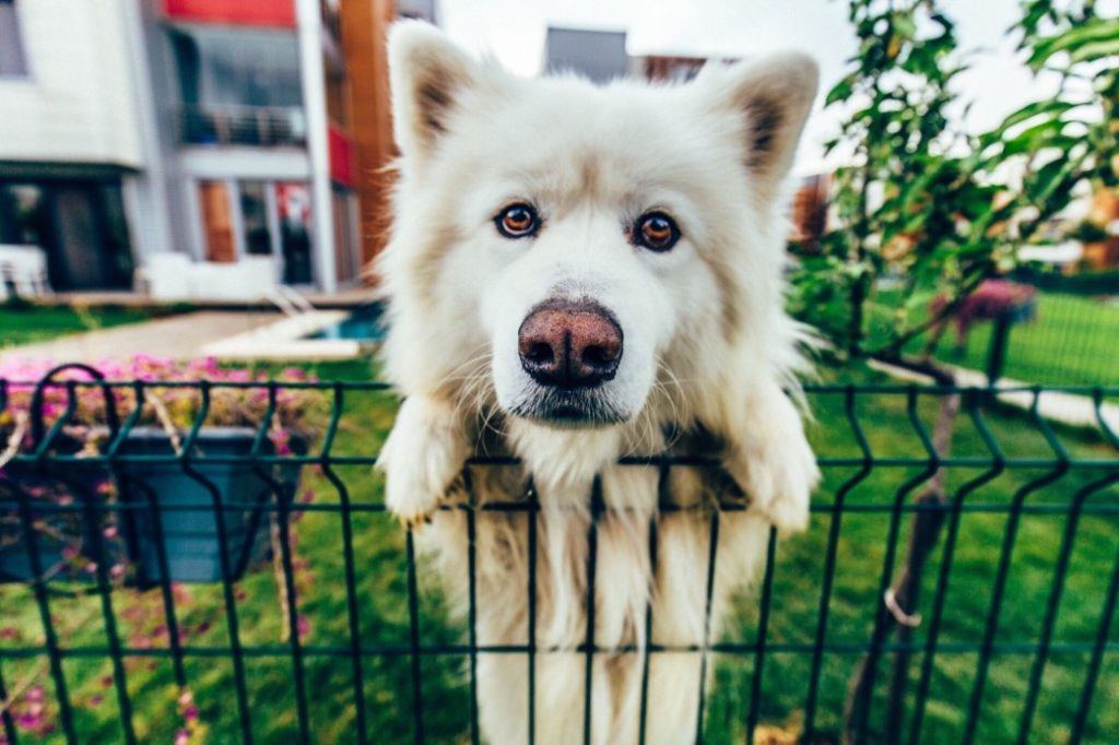 Spotting the Most Common Symptoms of Your Dog's Joint Problems