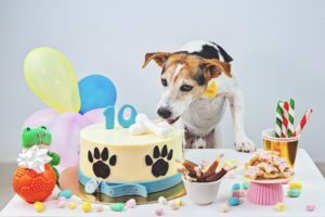 how to help my dog live longer