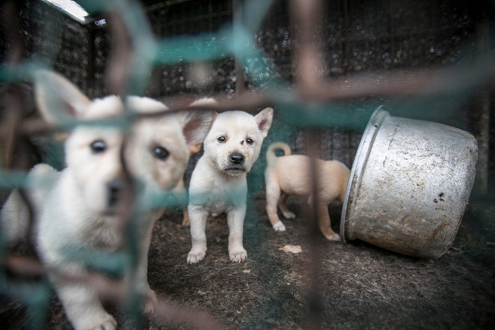 Meet the Dogs Saved from South Korea's Bok Nal Festival