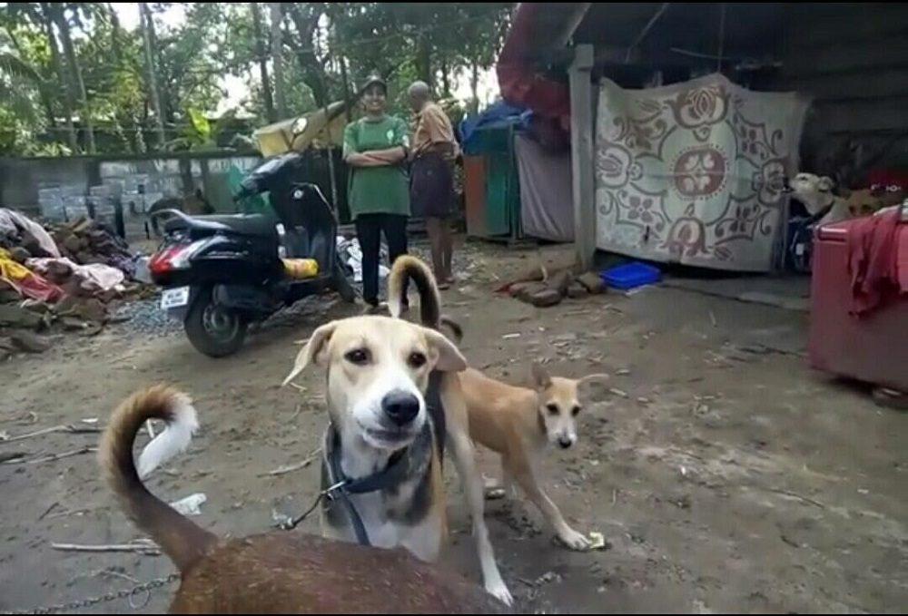 Floods in India: Saving Kerala's Stranded Animals