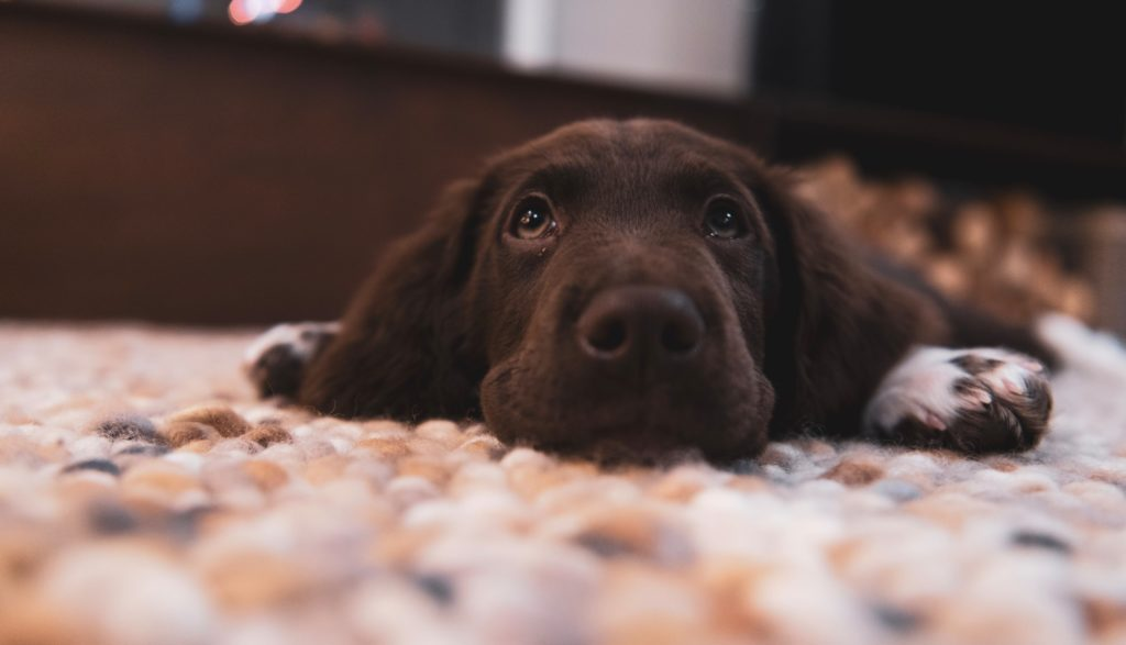10 Most Common Dog Owner Mistakes [Do You Do This?]