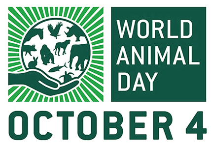 World Animal Day 2015 - How YOU Can Get Involved