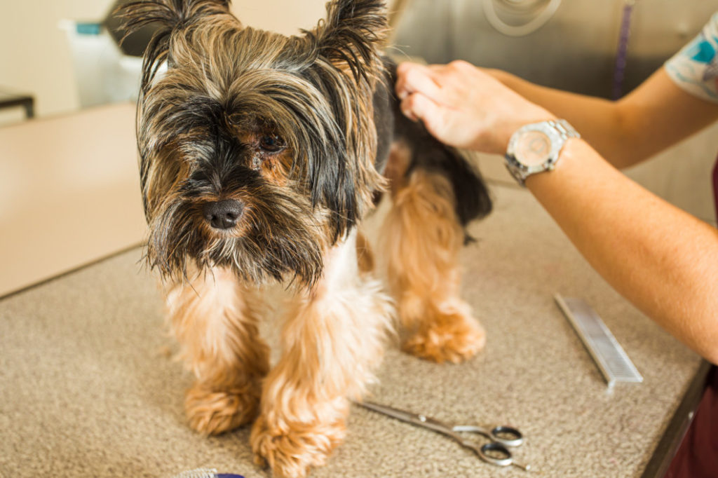 Could Your Home Be at Risk from Fleas this Autumn?