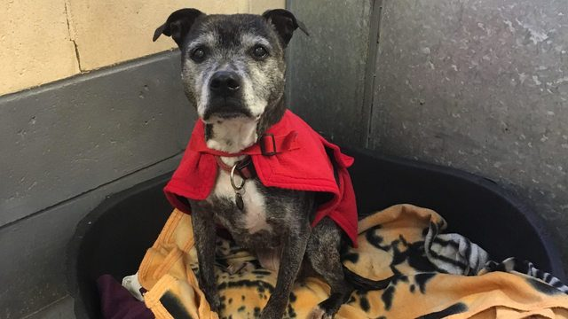 Desperately Seeking a New Home: 15-Year Old Dog Has Spent More than 900 Days in Kennels