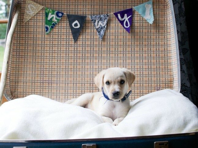 10 Of The Best Puppy Training Tips That Professional Dog Trainers Use