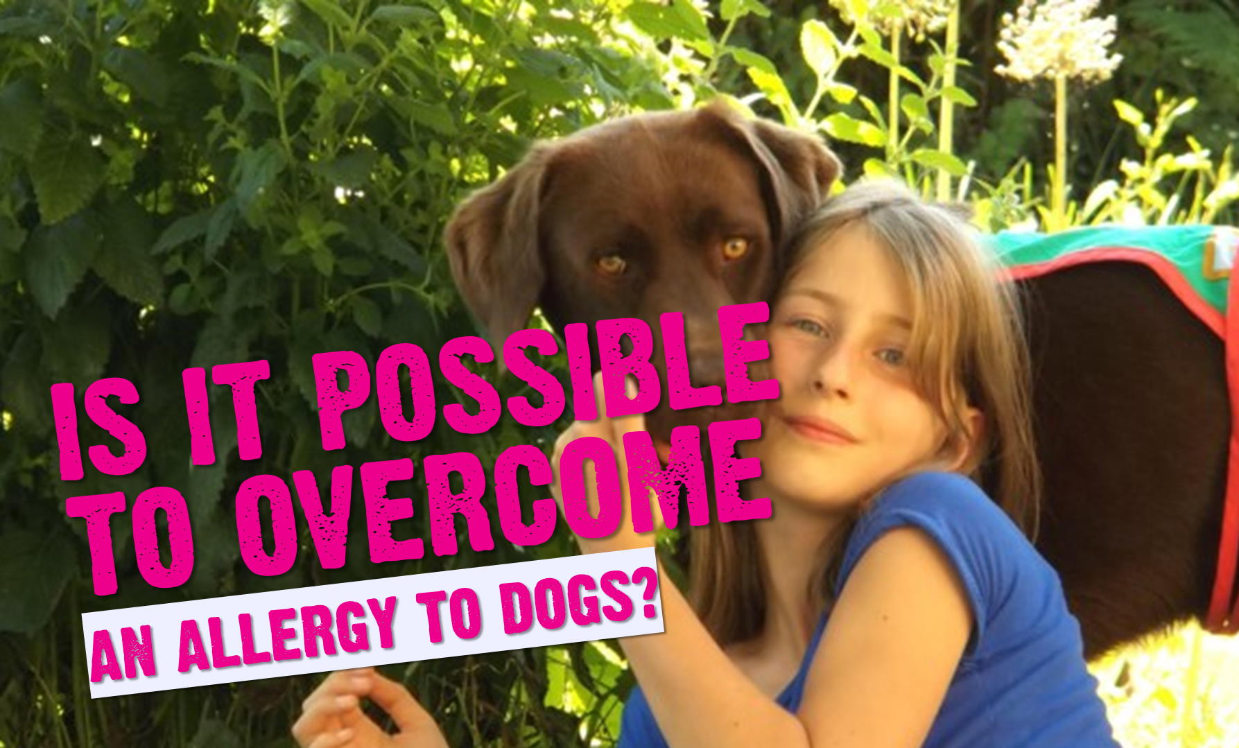 Is It Possible To Overcome An Allergy To Dogs? (Yes. Read This Story)