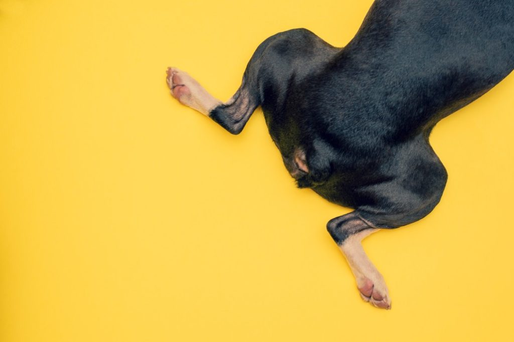 8 Myths About Arthritis In Dogs: Do Not Despair