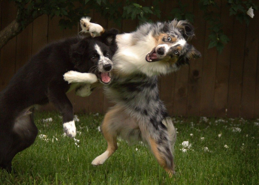 Can Dogs Have ADHD? (Symptoms & Signs Of ADHD In Dogs)