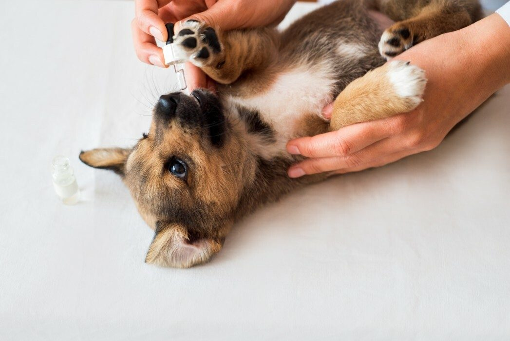 What Is The Leptospirosis Vaccine for Dogs?