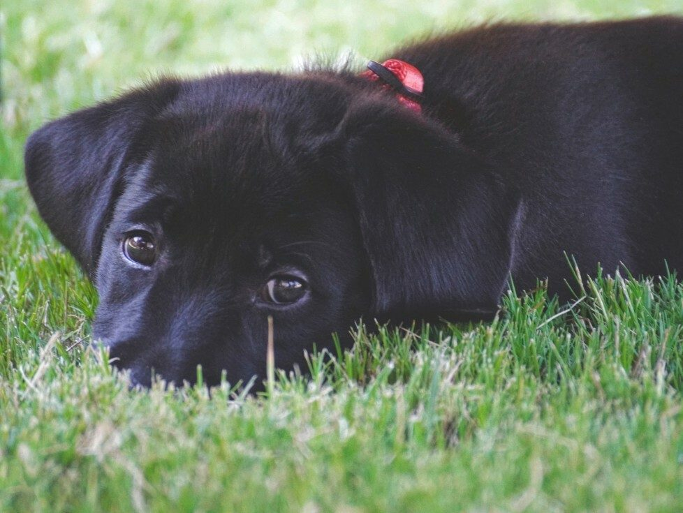 13 Black Dogs Who Need Some Luck