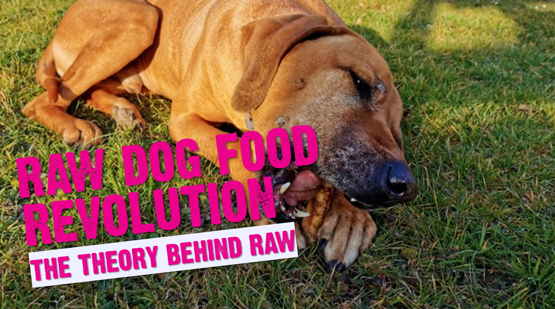 Raw Revolution - The Theory Behind The Raw Food Diet