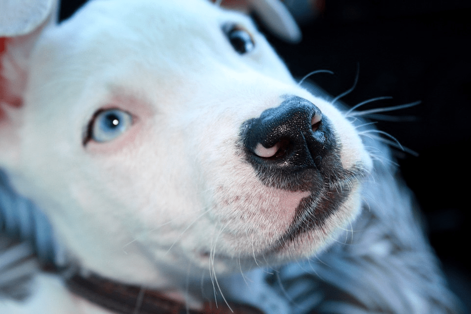 The Brutal Face of Breed Specific Legislation (BSL) in New Zealand