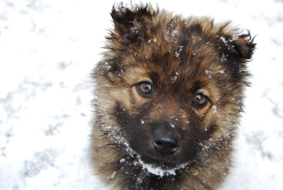 Can Dogs Really Die in Cold Weather?