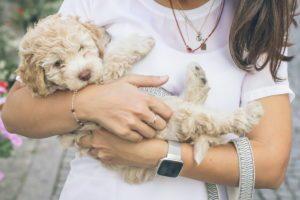 save money on pet insurance