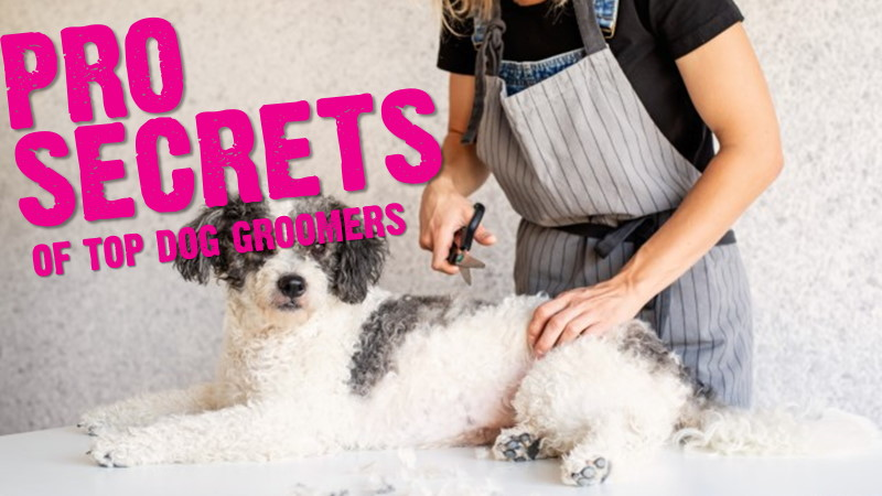 Top Dog Groomers Reveal Professional Secrets (Ultimate Guide To Dog Grooming)