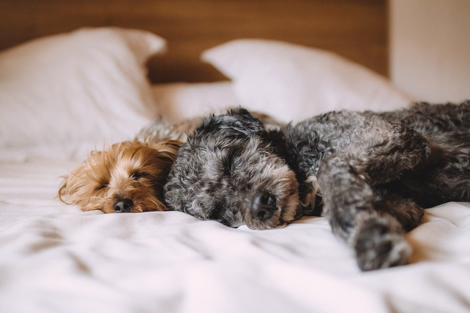 Have You Ever Wondered What Dogs Dream About?