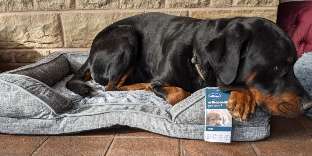 Our Dogs Tried These Silentnight Pet Beds & This Is What We Learned