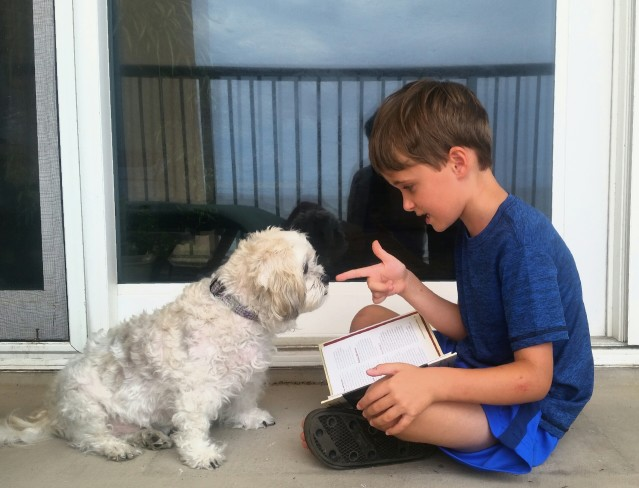 Dog Training Tips: Learning The 'Watch Me' Command