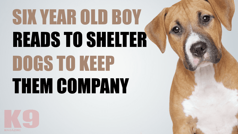 Watch as Six Year Old Autistic Boy Reads to Shelter Dogs to Keep Them Company