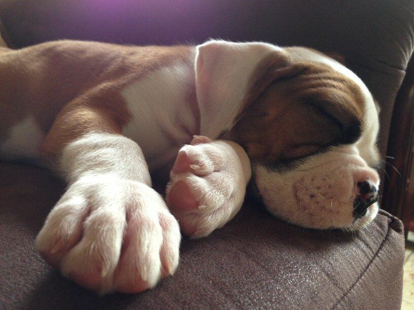 How Much Sleep Does Your Dog Need? (Ultimate Guide To Dog Sleep)