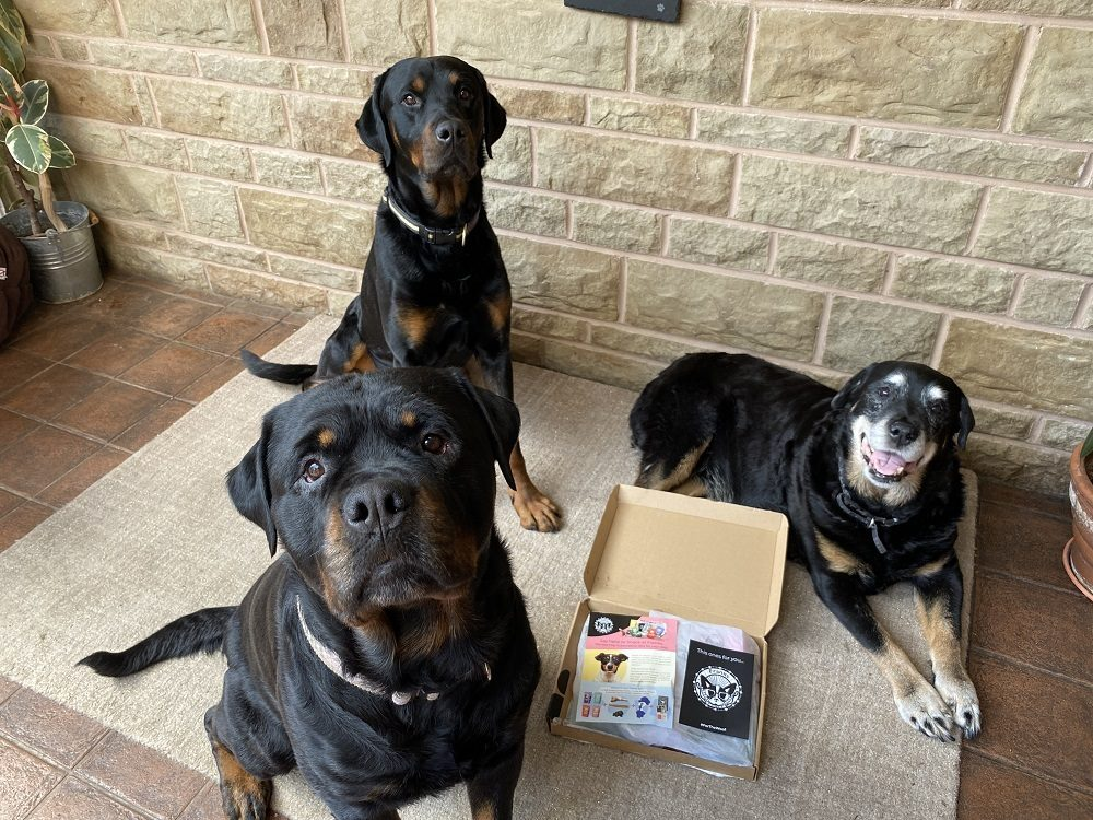 Snack at Franks Dog Subscription Box Review