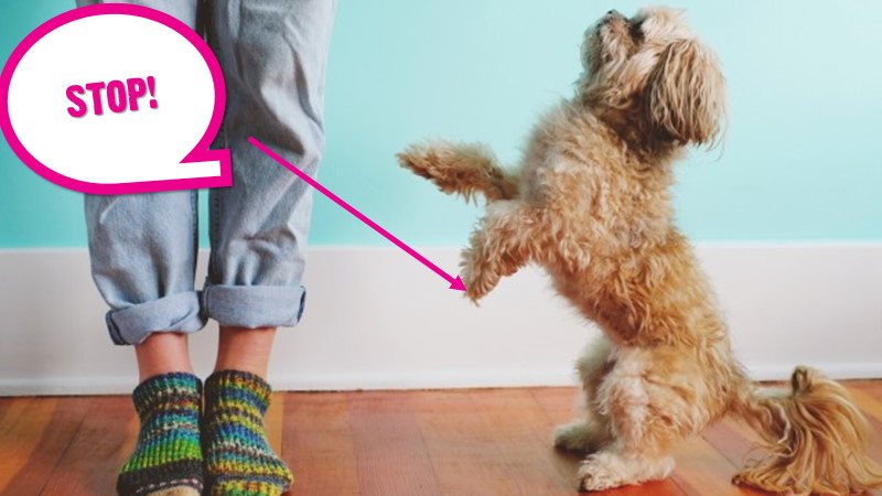 How To Stop Your Dog Jumping Up