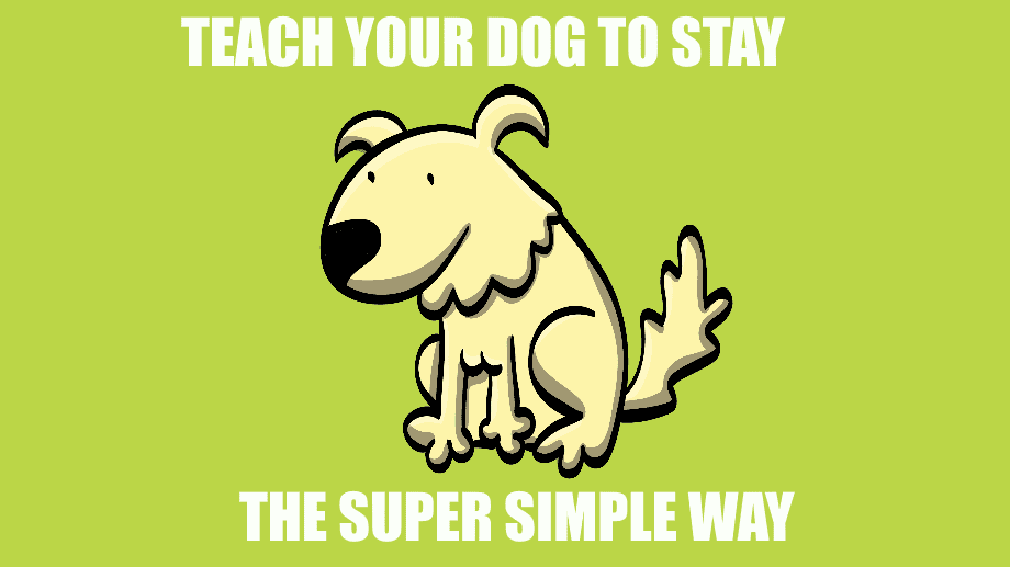 Teach Your Dog to Stay the Super Simple Way