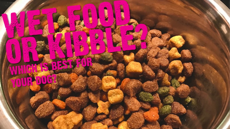 Wet Food v Kibble (Which Is Best For Your Dog?)